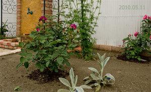 Garden0511a