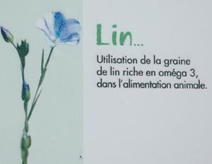 Lin_a