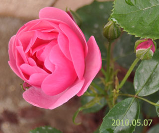 Garden0507b