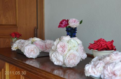 Rosegarden0530