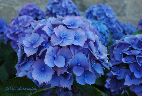 Bleu_1